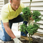 Article 23 get more info 150x150 - Benefits of Hiring a Landscaper in Adelaide for Your Garden Work